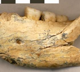jawbone- mala balanica-serbia