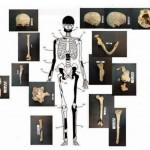 Amphipolis-Bones-belonging-to-the-60-year-old-female