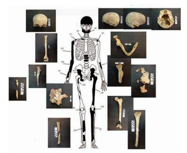 Bones belonging to the 60-year-old female in the Amphipolis tomb. Credit: Ministry of Culture