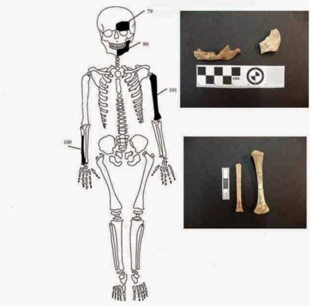 Bones found in the Amphipolis tomb belonging to newborn infant. Credit: Ministry of Culture