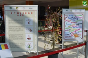 Grandma_March_Day_exhibition_by_HAEMUS_18